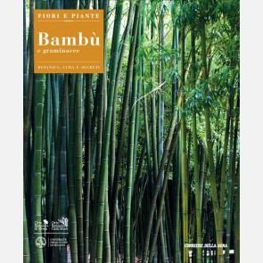 Bambù e graminacee