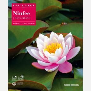 Ninfee e fiori acquatici